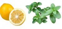 Zitrone-Minze 10ml Liquid - V! Liquid